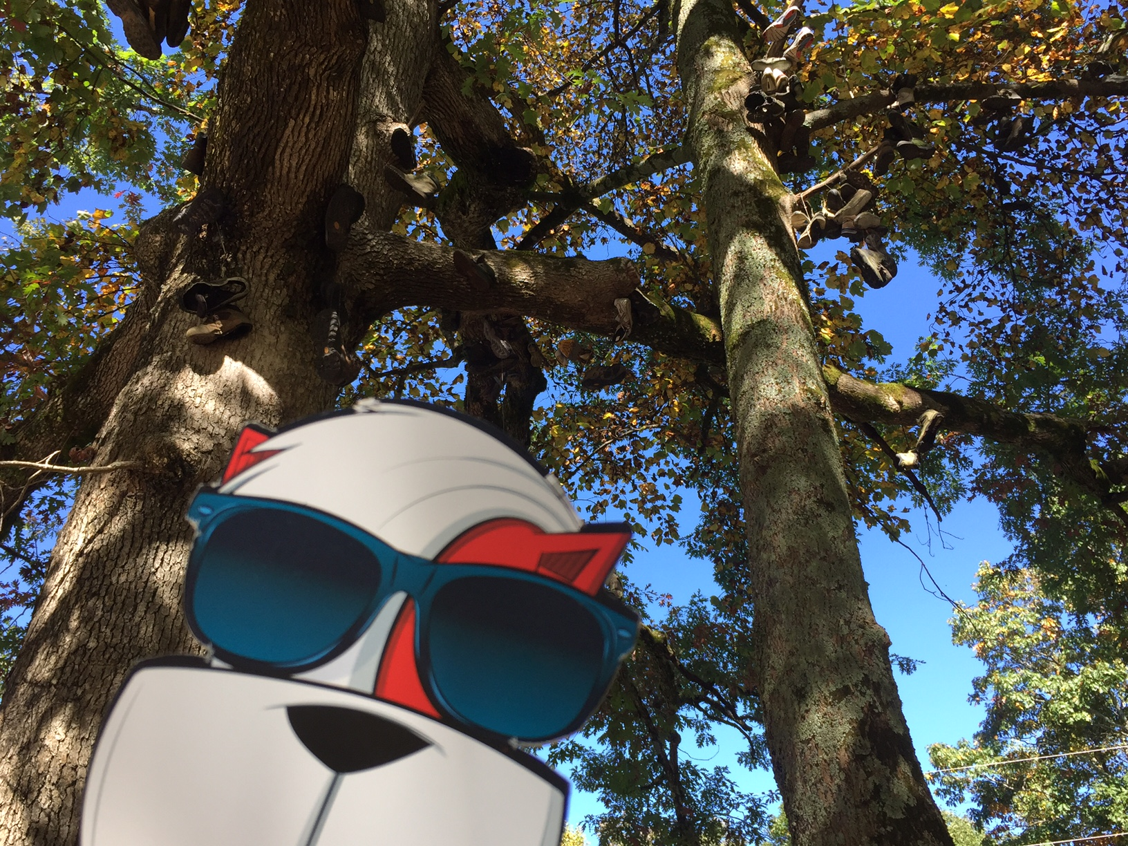 Image perceived to contain Glasses Goggles  on the Moppy and I Tackle an Appalachian Journey—205,485 Steps at a Time - Marietta & Kennesaw GA page