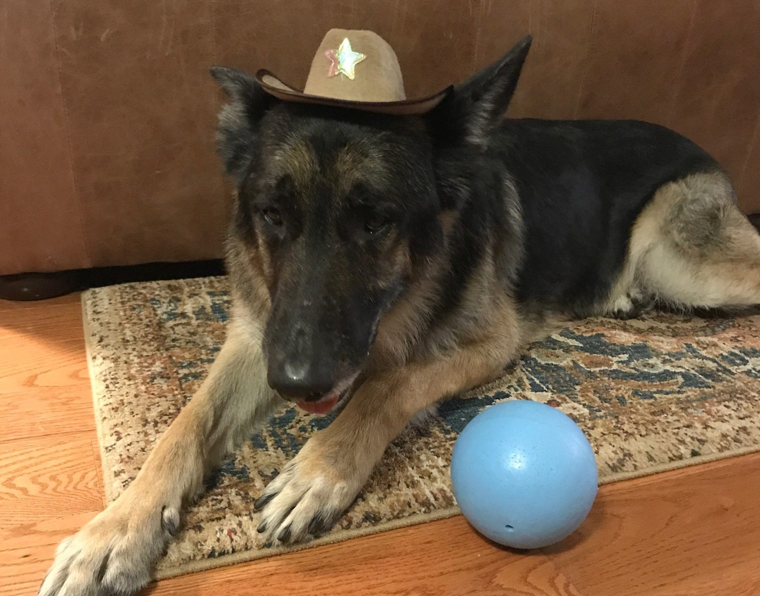 Image perceived to contain Animal, Canine, Collie, Dog, Mammal, Pet, German Shepherd, Hat, Adorable, Cap, Husky, Sun Hat on the 's Pet Costume Contest 2017! - Atlanta & Kennesaw GA Web Design page