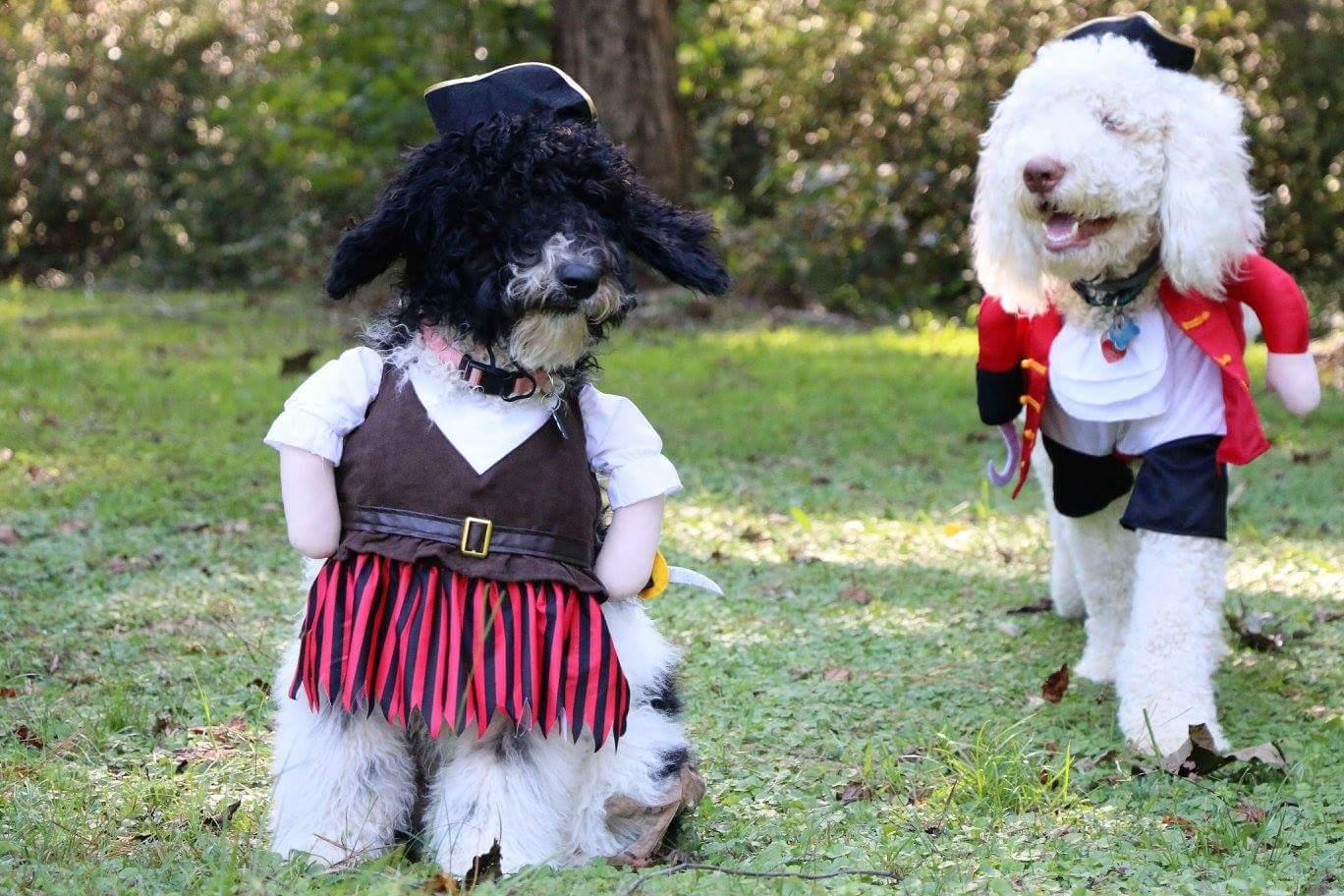 Image perceived to contain Animal, Canine, Dog, Mammal, Pet, Poodle, Costume, Adorable on the 's Pet Costume Contest 2017! - Atlanta & Kennesaw GA Web Design page